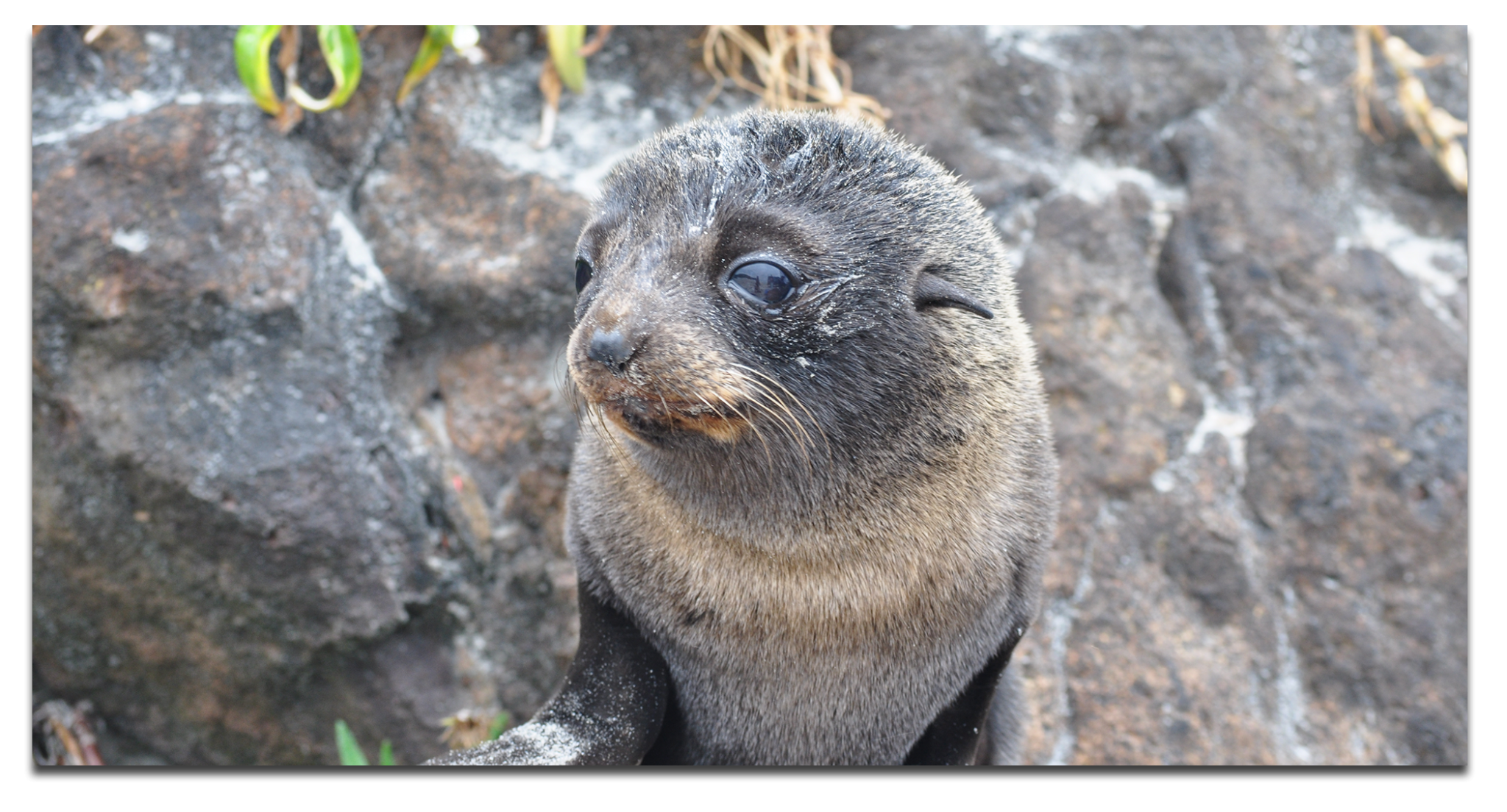 Baby-Seal20